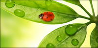Floating plants and insects picture material-8