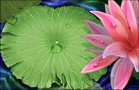 Lotus and water